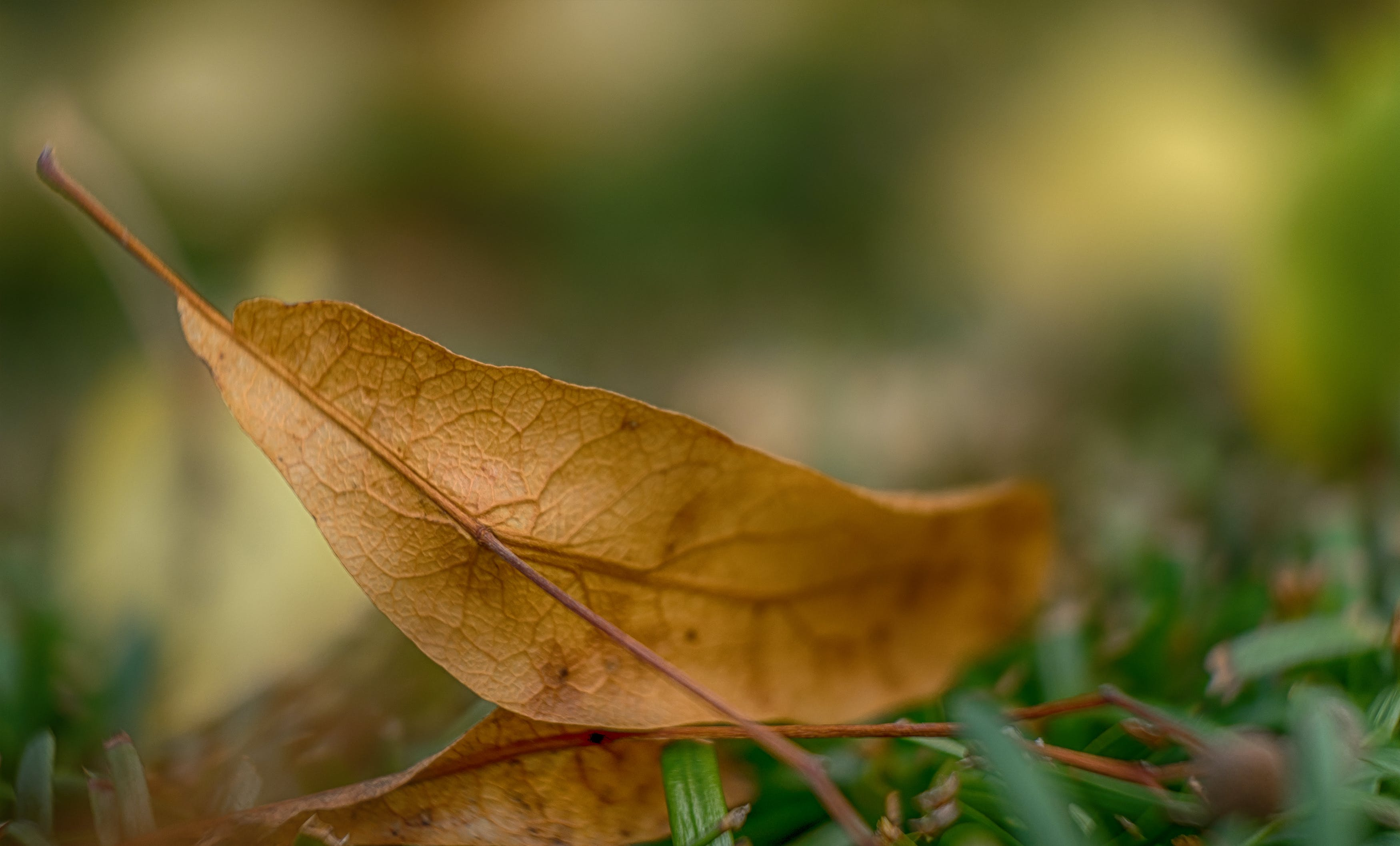 Dry Leaf Shallow Focus Photography