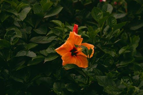 Fotobanka sbezplatnými fotkami na tému krásny, kvet, kvety, príroda