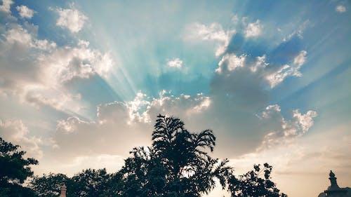 Imagine de stoc gratuită din arbori, cer, cer albastru, lumina soarelui