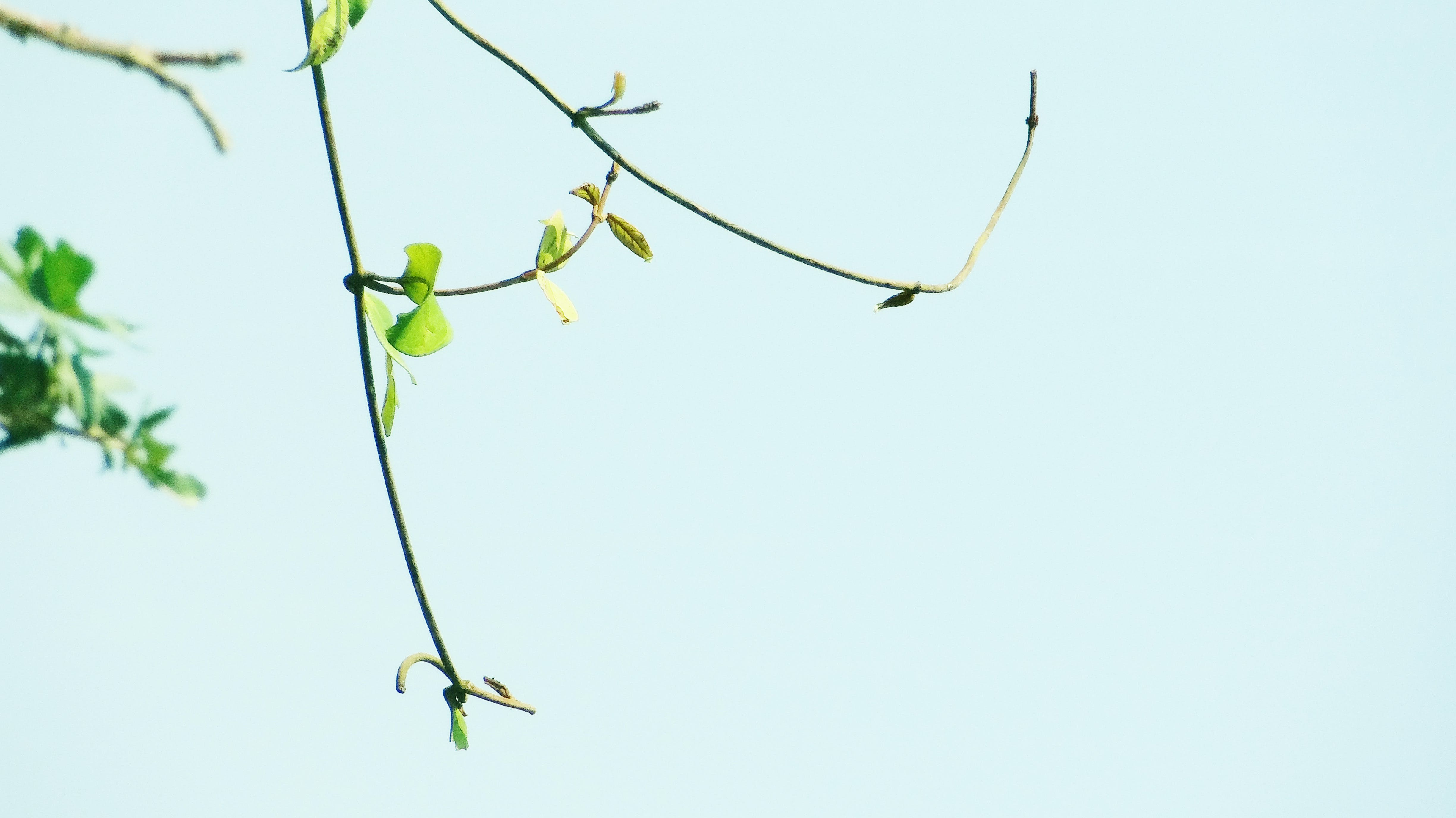 Free stock photo of branch, leaves, portrait, trees