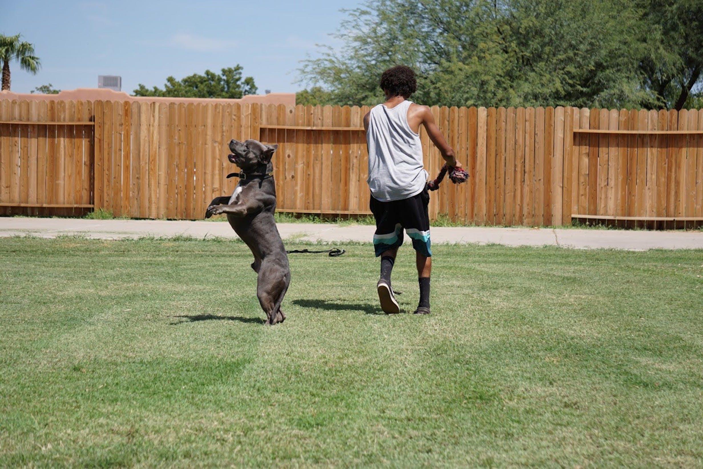개, 개의, 남자, 동물의 무료 스톡 사진
