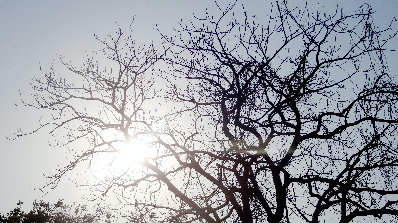 Free stock photo of black&white, black-and-white, shadows, trees