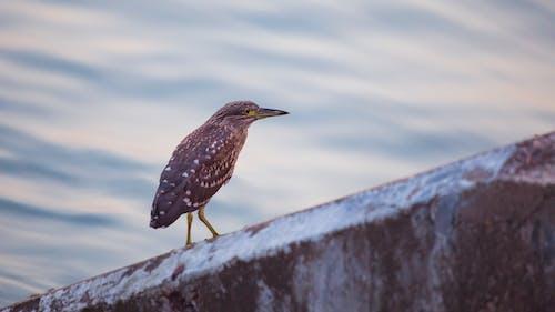 akşam, ayakta, balıkçıl, çevre içeren Ücretsiz stok fotoğraf