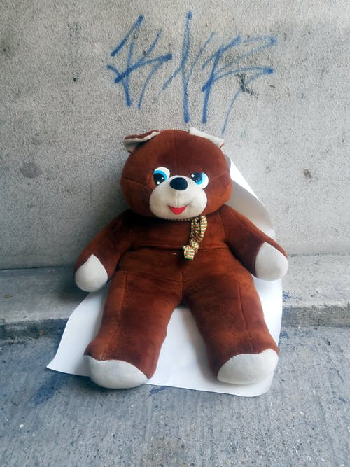 Free stock photo of bear, teddy