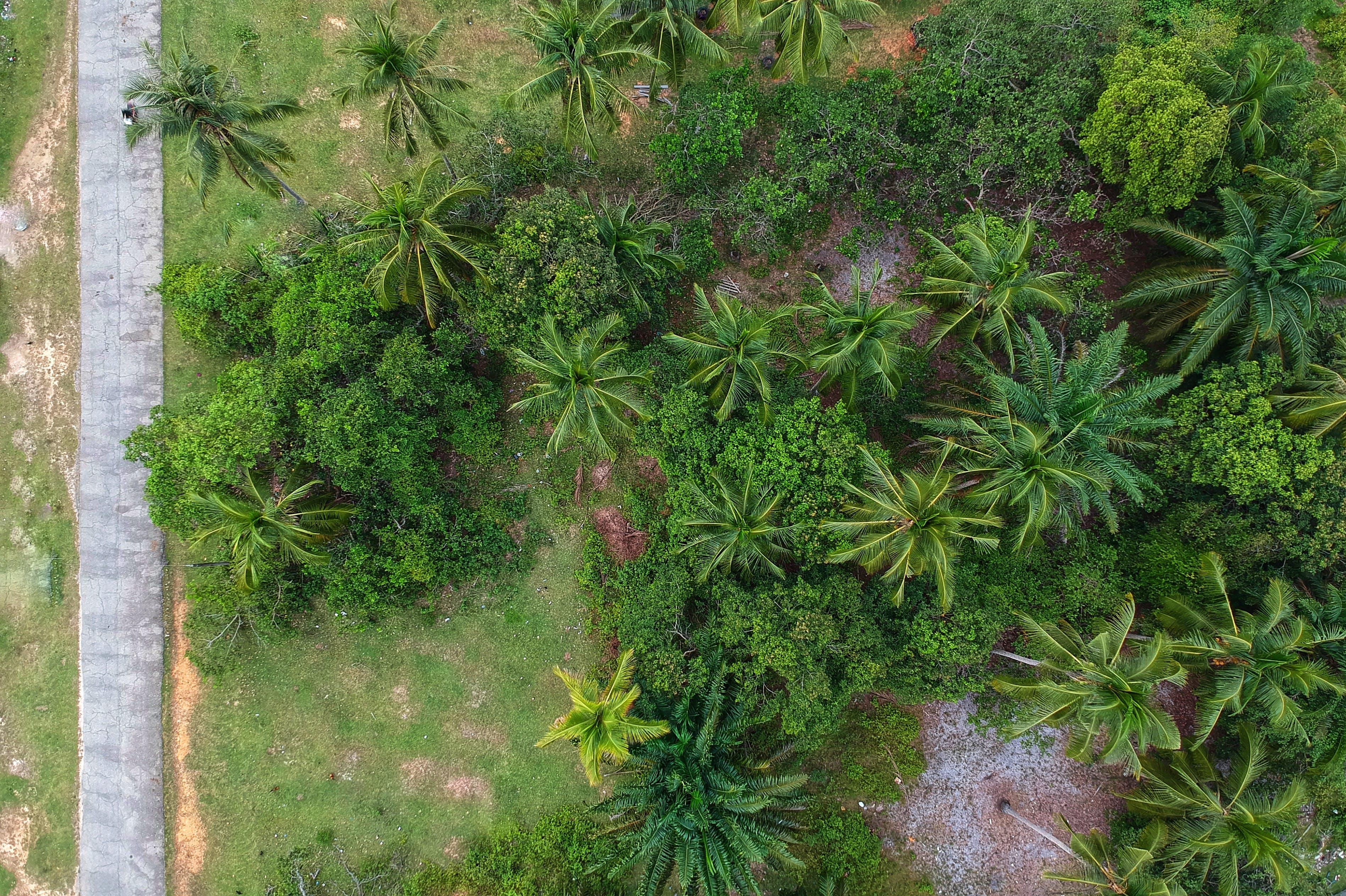 ココナッツの木, ダークグリーンの植物, トロピカル, パークの無料の写真素材