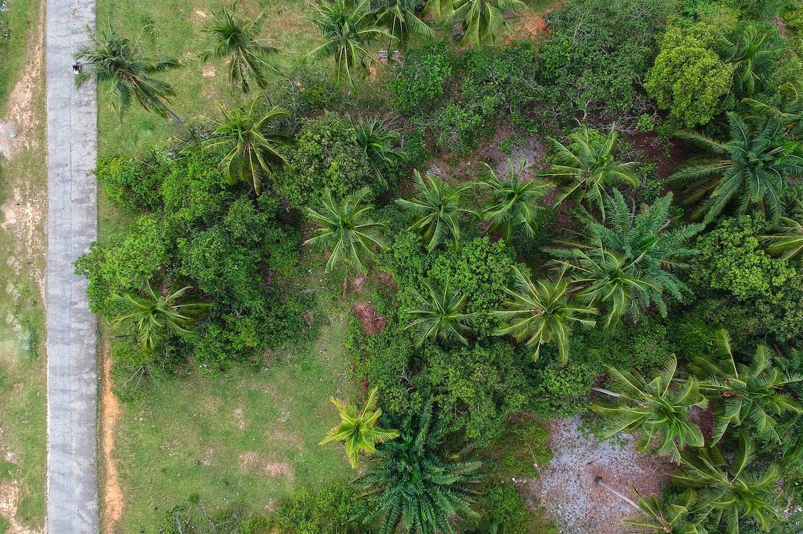 arbre, bois, botanique