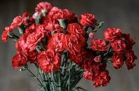 red, love, romantic
