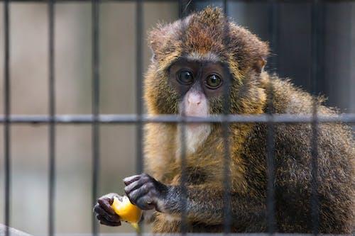 Kostnadsfri bild av bur, caged, djur, ledsen