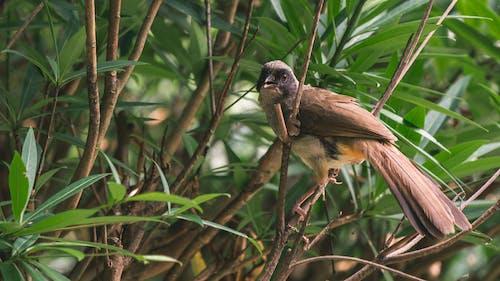 Darmowe zdjęcie z galerii z dzika przyroda, liście, ptak, ptasi