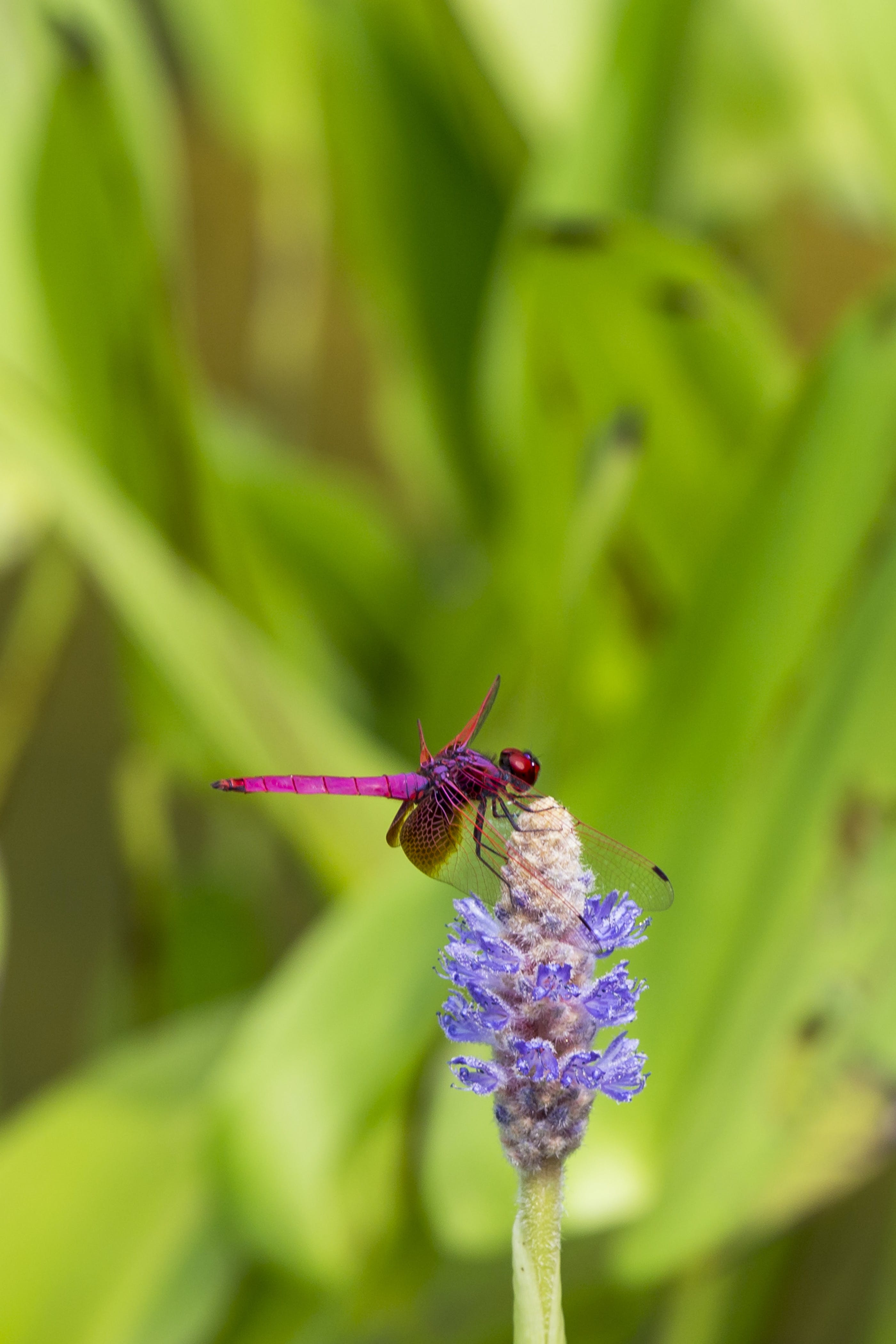 Macro Shot Photography Of Dragonfly On Purple Flower