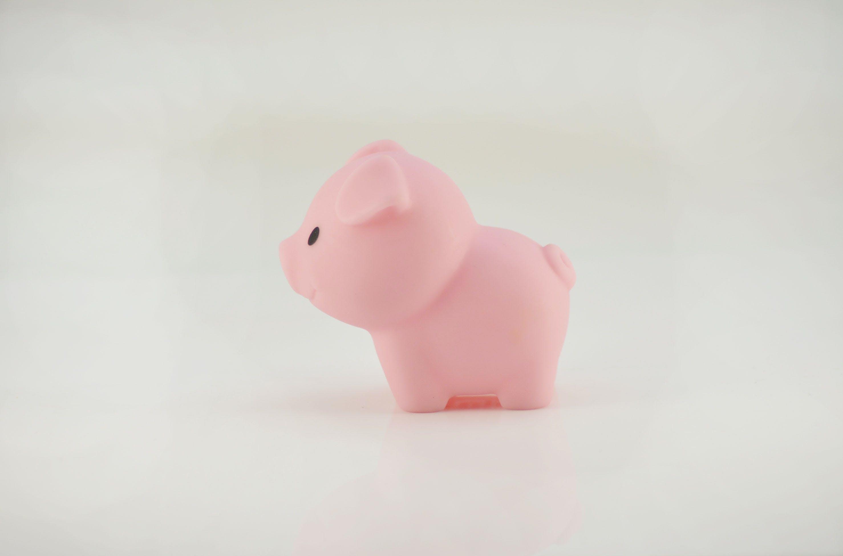 Gratis lagerfoto af bad legetøj, gris, gummi legetøj, gummi piggy