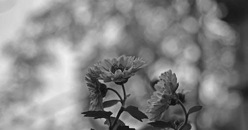宏觀, 植物, 植物群, 綻放 的 免費圖庫相片