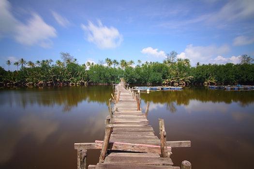 Free stock photo of water, bridge, trees, lake