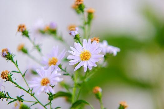 Free stock photo of flowers, garden, petals, blur