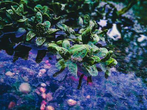 คลังภาพถ่ายฟรี ของ น้ำ, ใบสีเขียว, ใบไม้สีเขียว