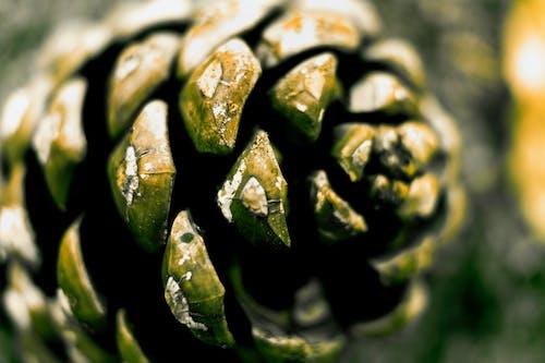 Бесплатное стоковое фото с вода, зеленый, природа, сосновая шишка