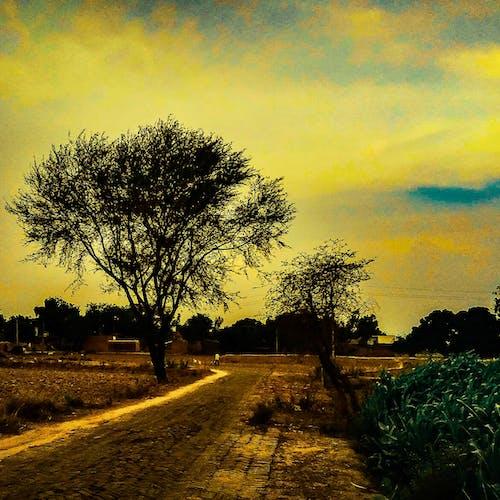 คลังภาพถ่ายฟรี ของ คน, ถนน, ท้องฟ้า, ท้องฟ้าตอนเย็น