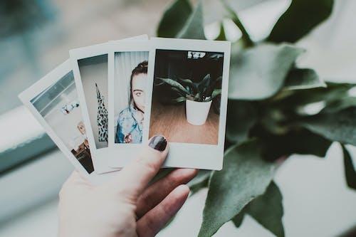 圖片, 宏觀, 照片, 相片 的 免費圖庫相片