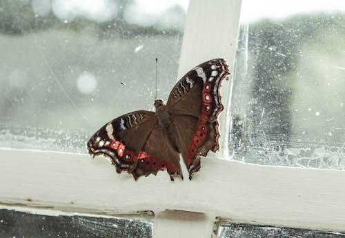 Kostnadsfri bild av afrika, brun, fjäril, glasfönster