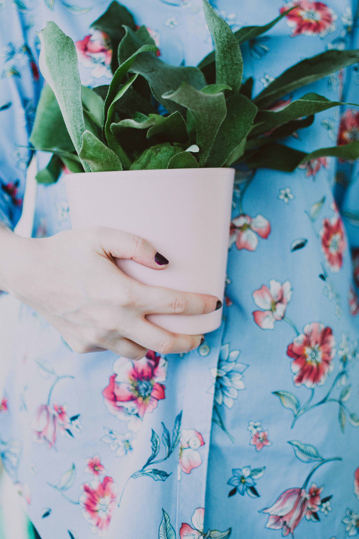 hand, pflanze, topfpflanze