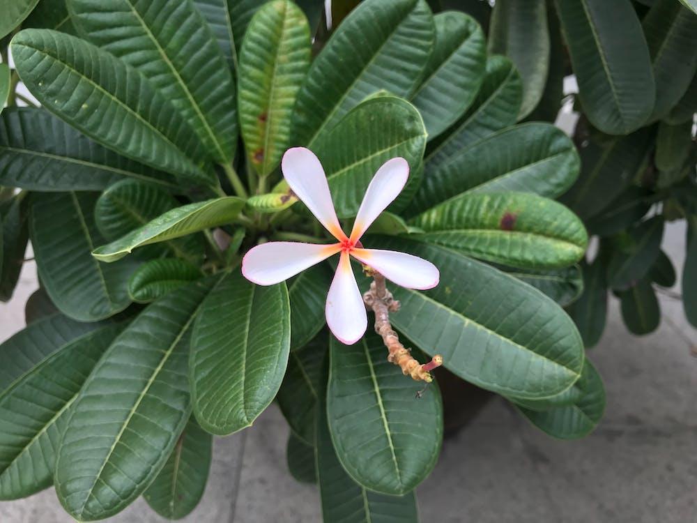 白色, 綠色, 花 的 免費圖庫相片