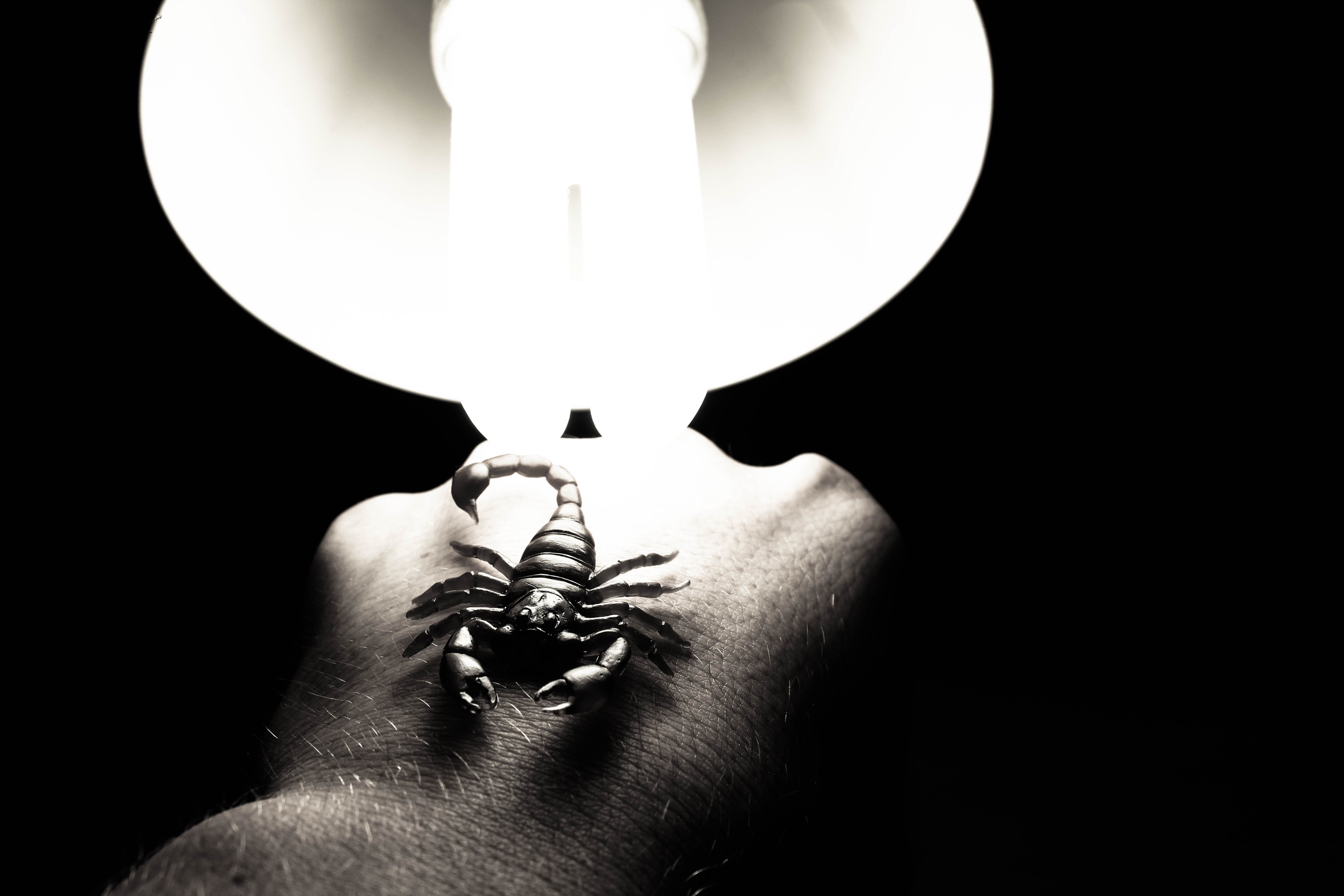 Foto profissional grátis de escorpião, escuro, mão