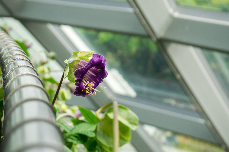 Ingyenes stockfotó kert, növényvilág, szirmok, virág témában