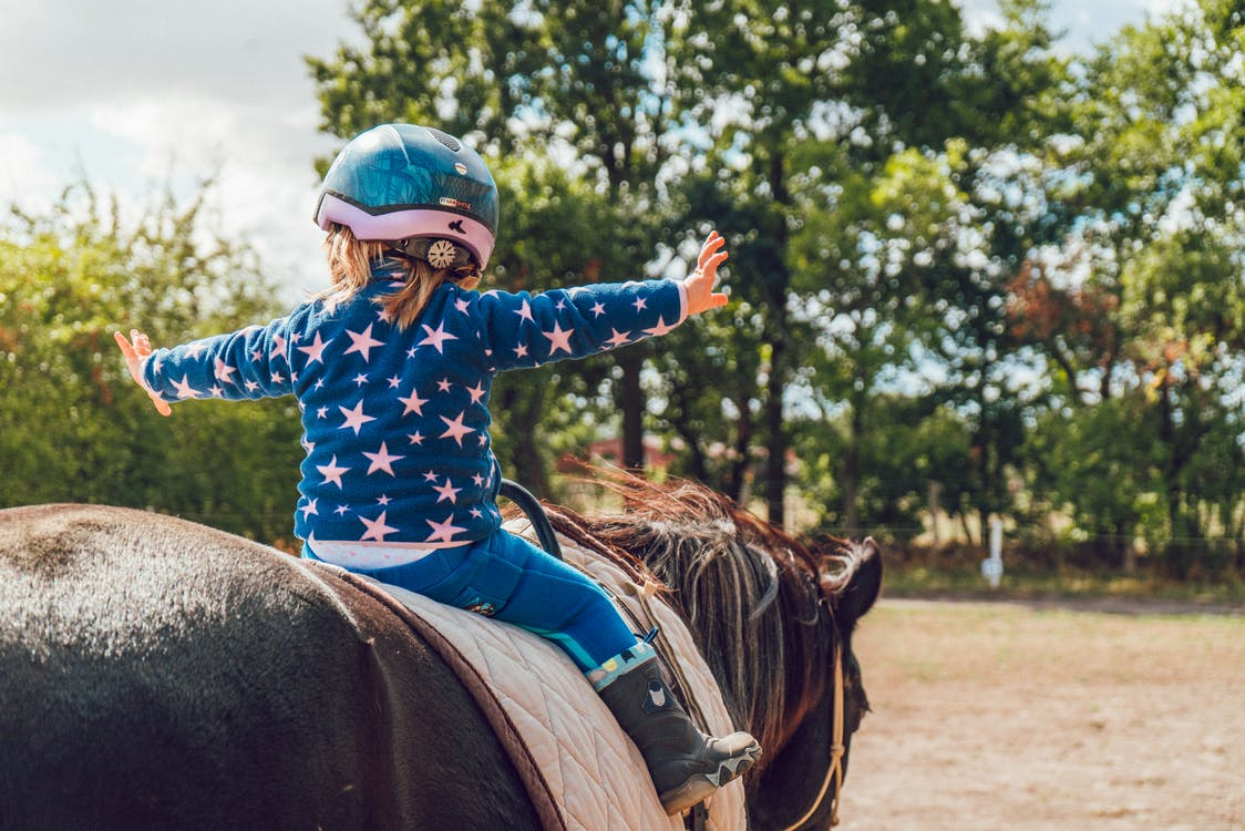 Fotos de stock gratuitas de al aire libre, arboles, caballo