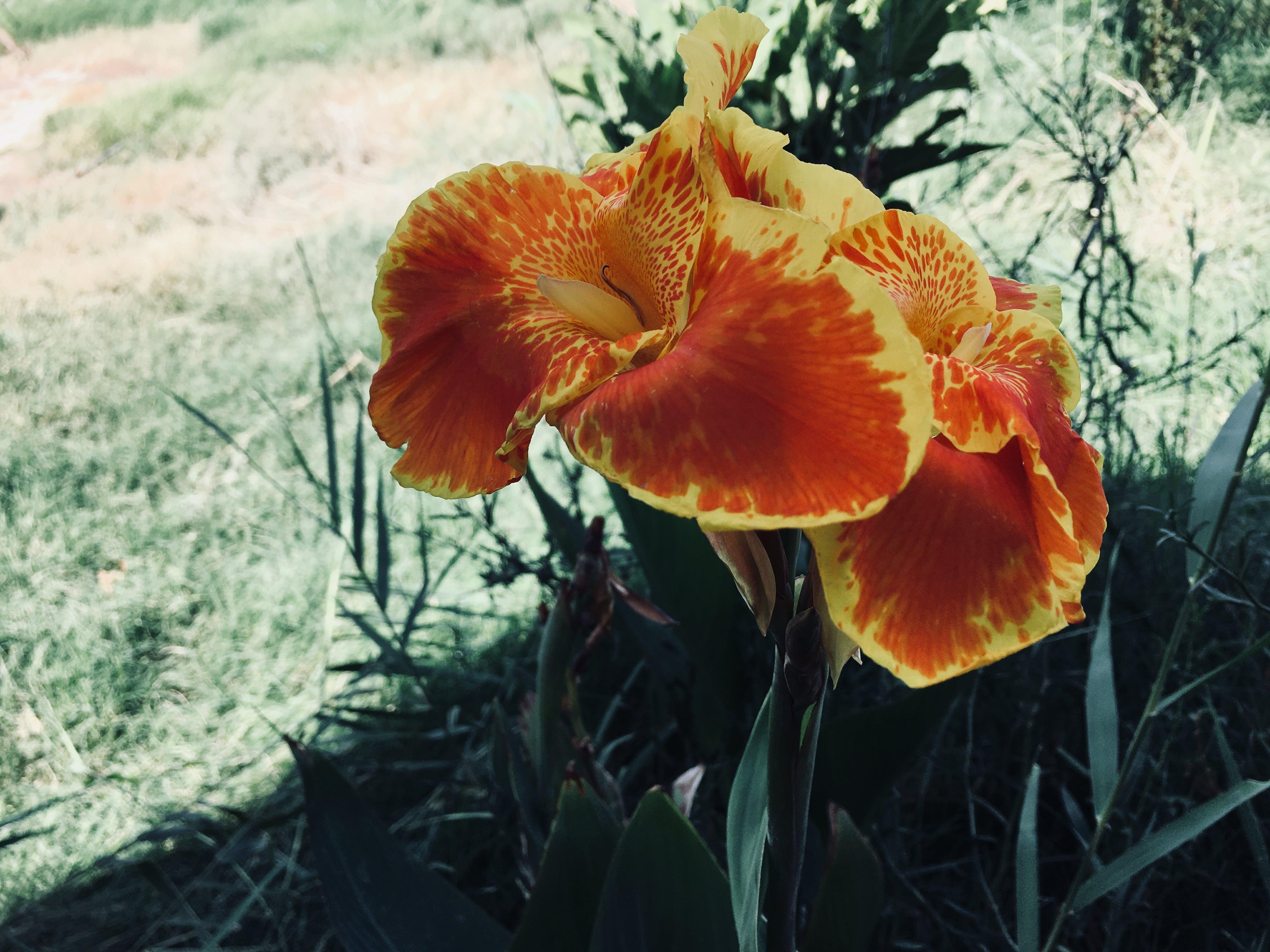 Free stock photo of artificial flowers, drama, garden, garden plant