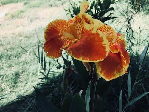 Fotobanka sbezplatnými fotkami na tému dráma, oranžová, umelé kvety, záhrada