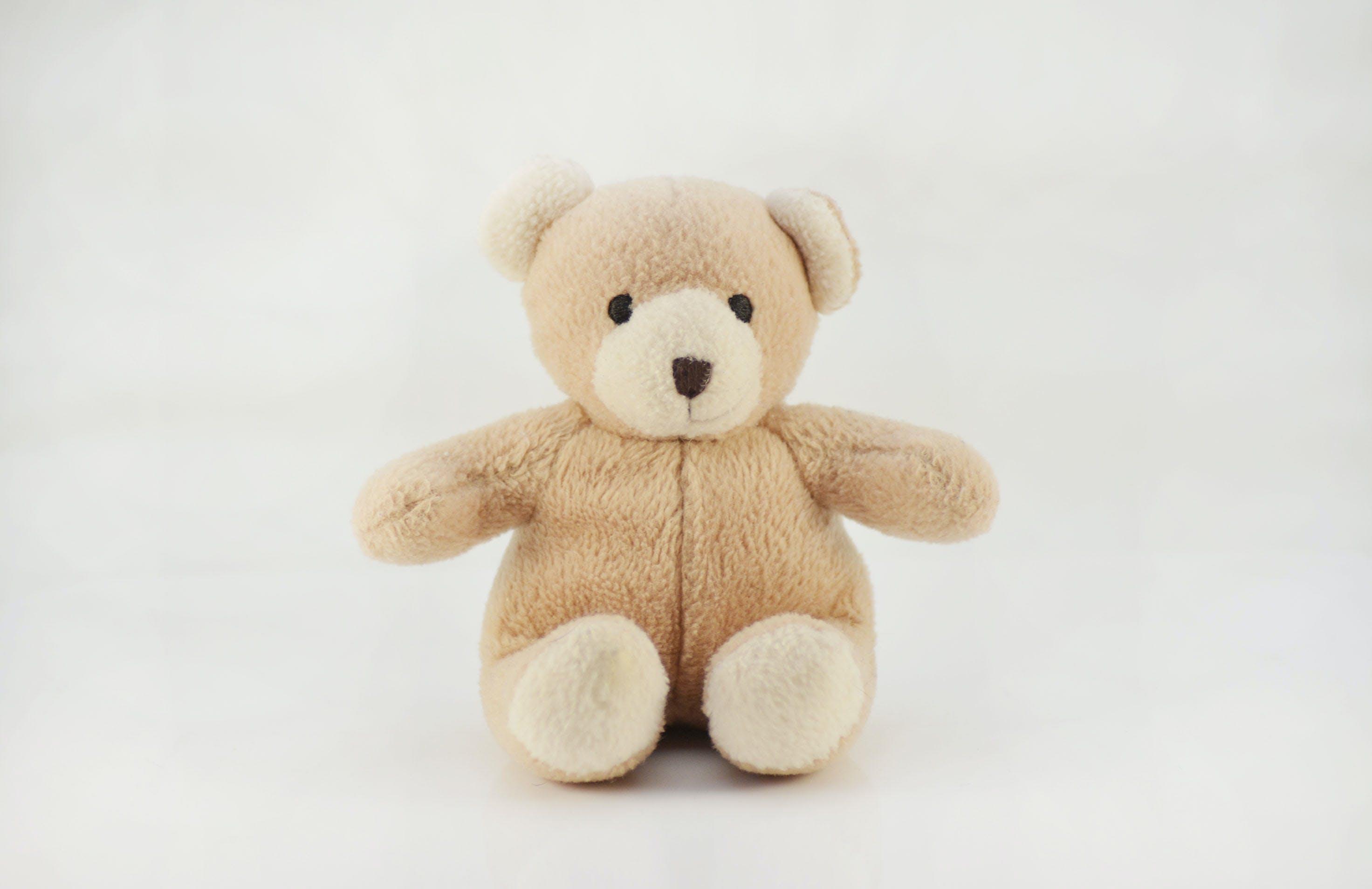 Gratis lagerfoto af bamse, bjørn, brun bamse, brun bjørn