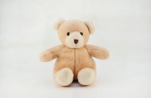 Ingyenes stockfotó barna mackó, barnamedve, fehér háttér, medve témában