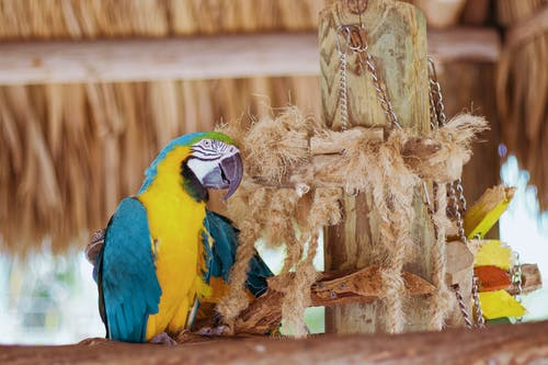 Macaw Perching Beside Rope