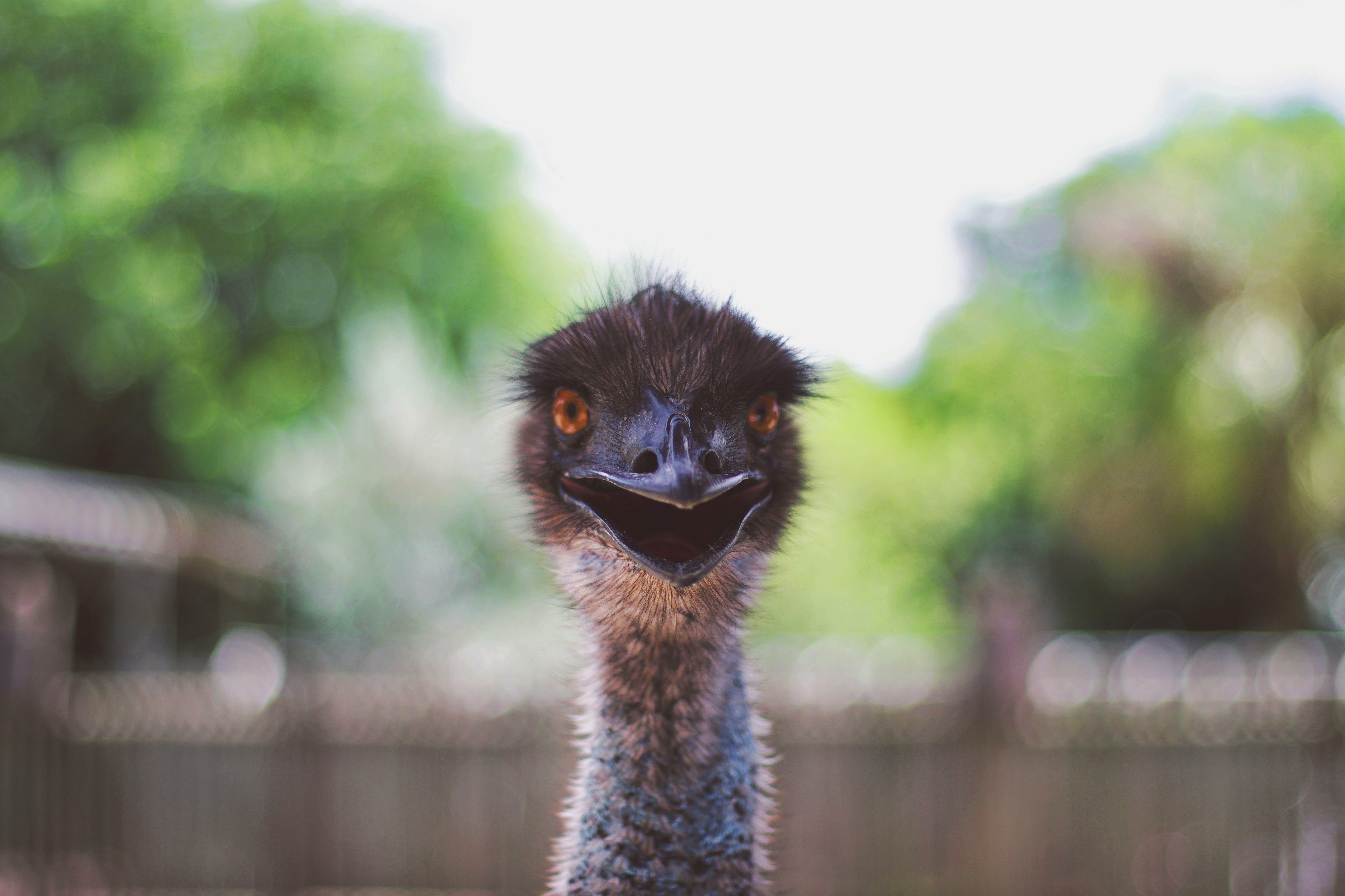 Shallow Focus Photography of Ostrich Head