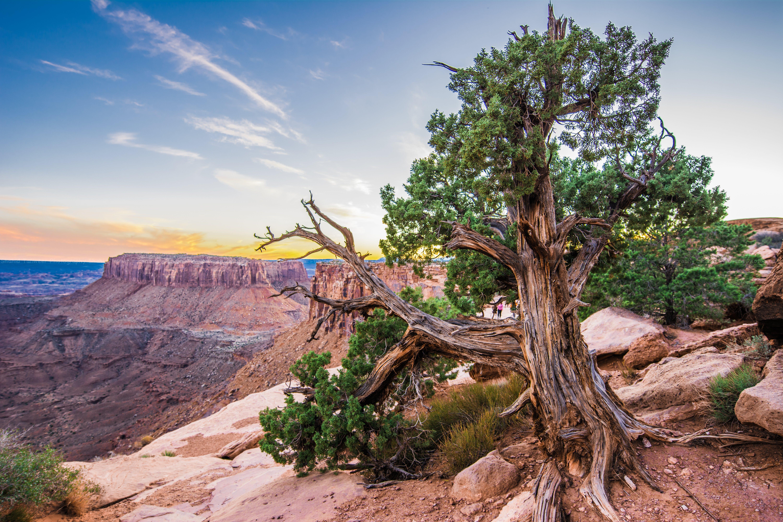 Kostenloses Stock Foto zu baum, berg, canyon, dürr