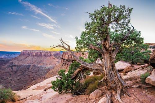 Foto d'estoc gratuïta de arbre, àrid, barranc, desert