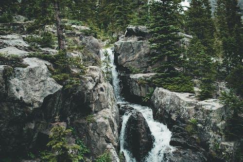Gratis stockfoto met berg, bomen, bossen, buitenshuis