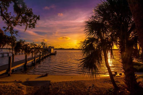 Silhouette of Palm Trees Near Body of Water and Sea Dock during Golden Hour