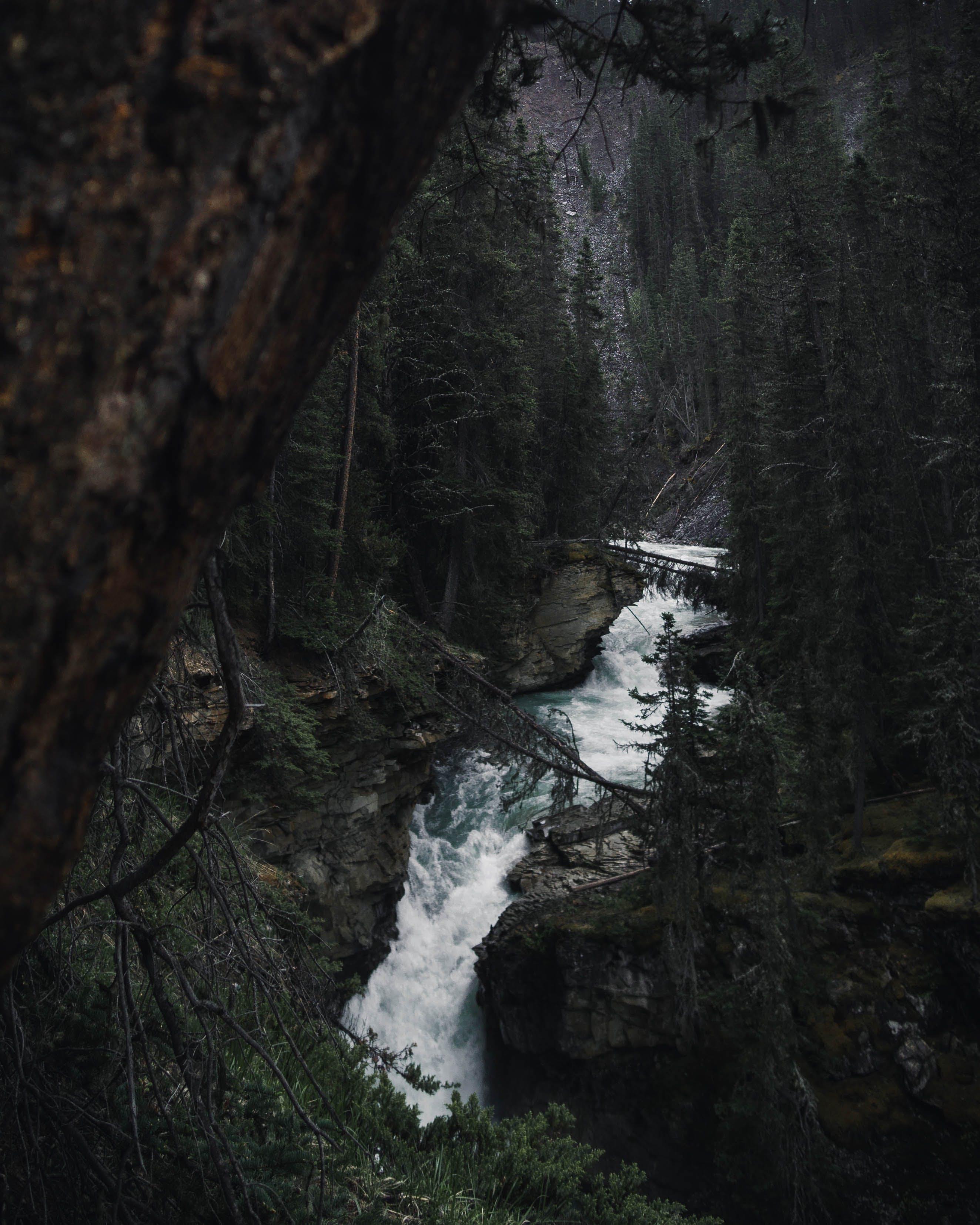 de agua, arboles, bosque, cascadas