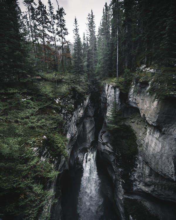 abismo, água, árvores