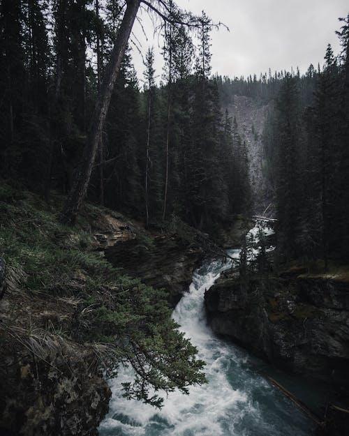 Imagine de stoc gratuită din apă, arbori, codru, expunere lungă