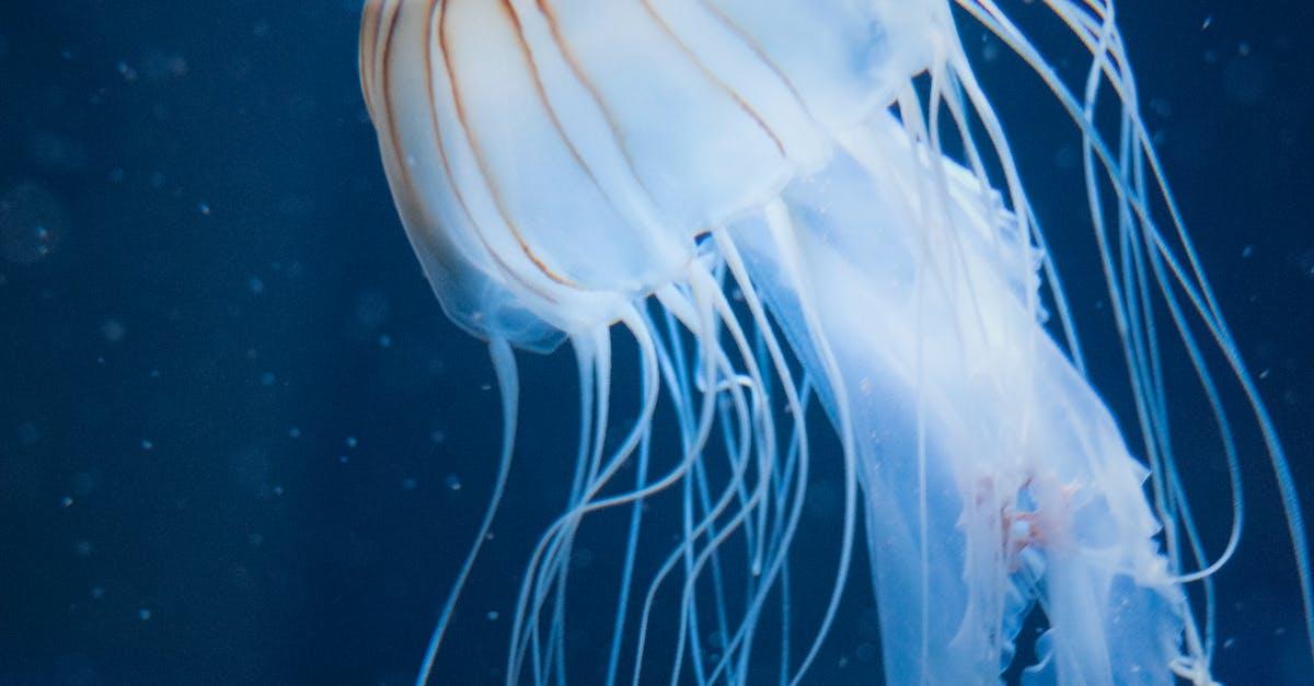 Прикольные картинки медузы, квадратной картинки инстаграм