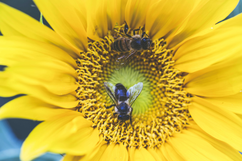 Fotos de stock gratuitas de abejas, amarillo, brillante, colores