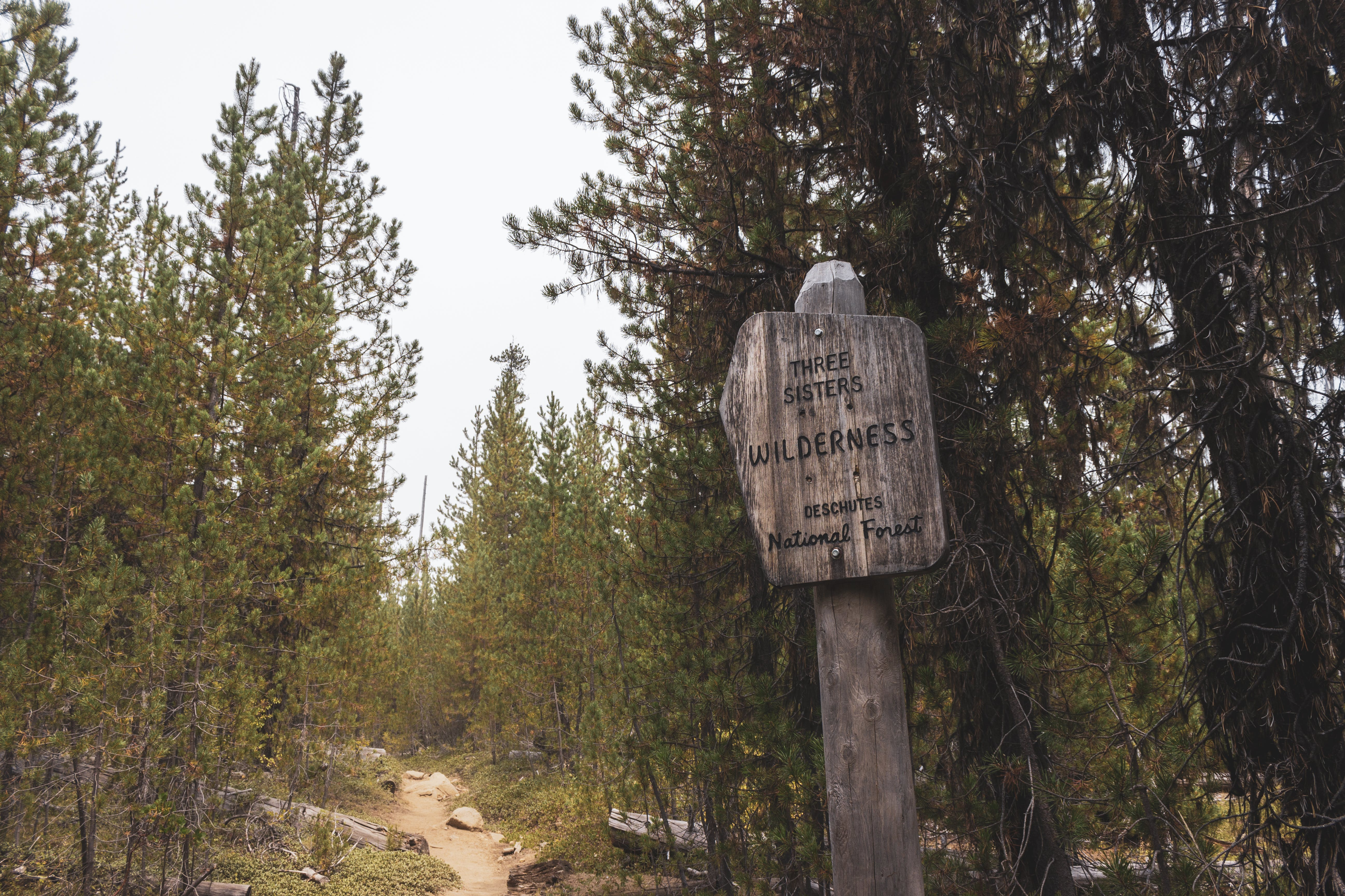 Free stock photo of forest, national forest, sign, three sisters