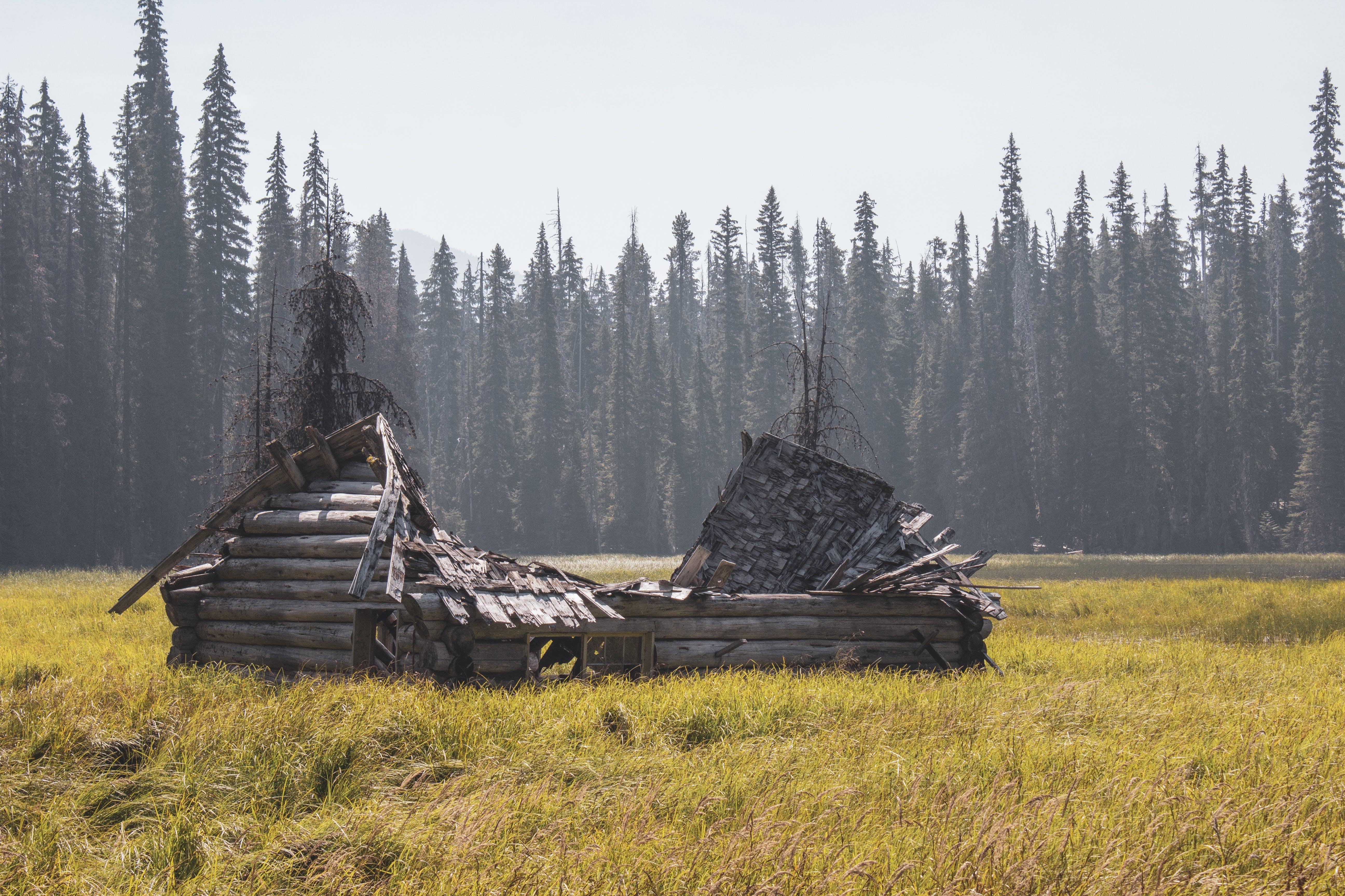 樹木, 沼澤 的 免费素材照片