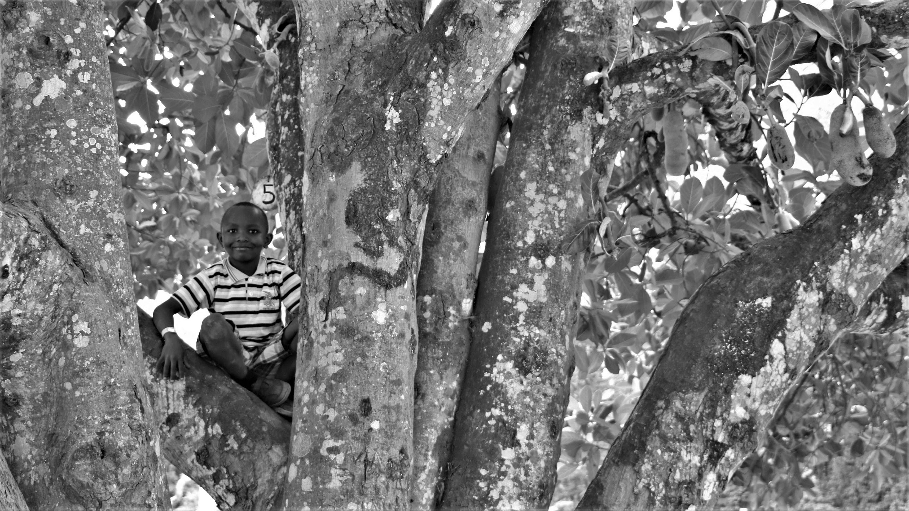 Grayscale Photo of Boy Sitting on Gray Tree Trunk