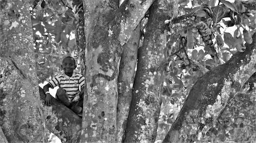 Immagine gratuita di abbaiare, albero, ambiente, bianco e nero