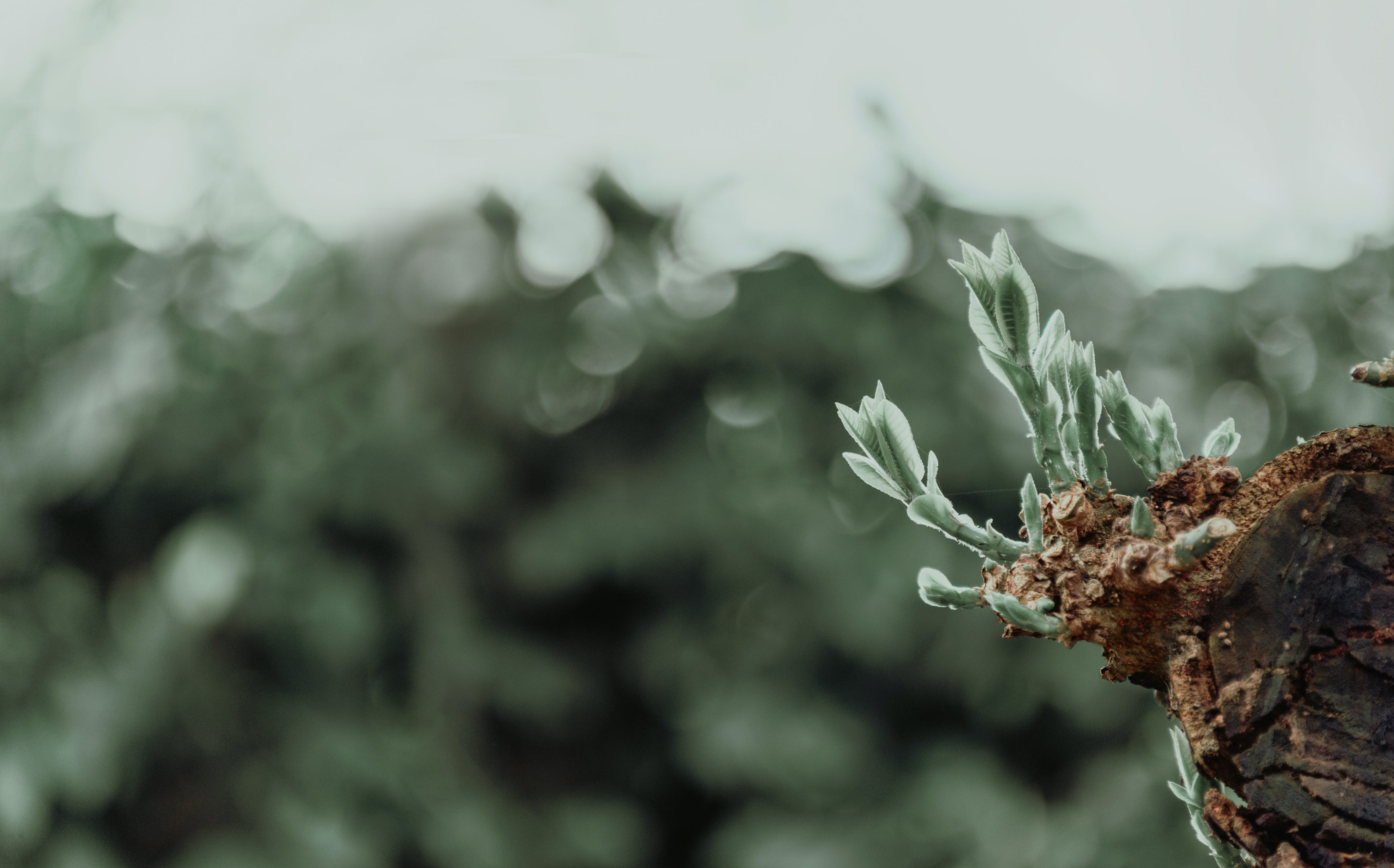Shallow Focus Photography Of Plant Growing