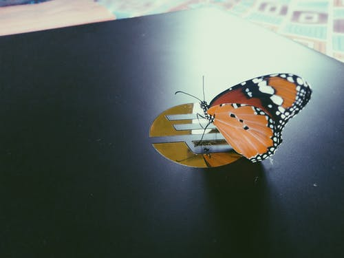 Free stock photo of butterfly, On a laptop
