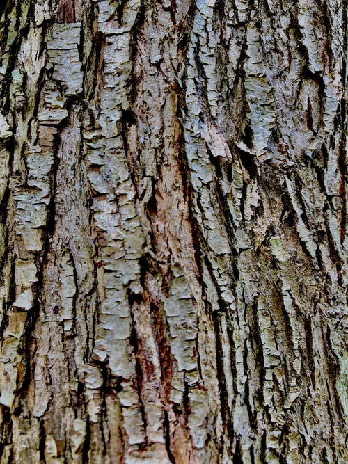 Základová fotografie zdarma na téma kůra, obrázek na pozadí, pozadí, strom